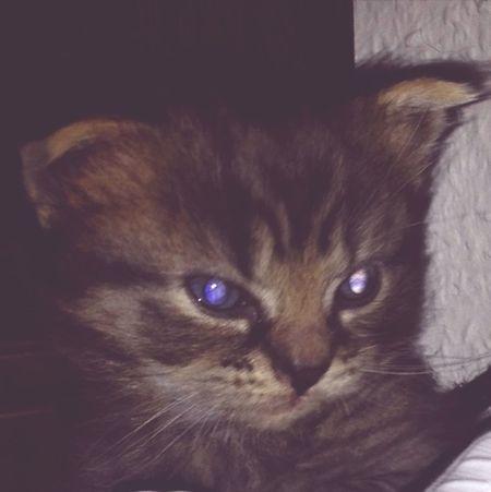 Cat Sweet Kitten