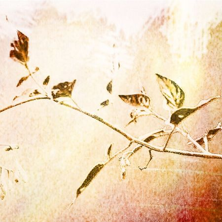 Nature Simplistic Close-up Leaf No People Indoors  Nature Day Nature Photography Fine Art Photography Photo Art Vintage Style Decor Leaves Branch Simplicity Beauty In Nature Artistic Photo Nature_collection Artsy