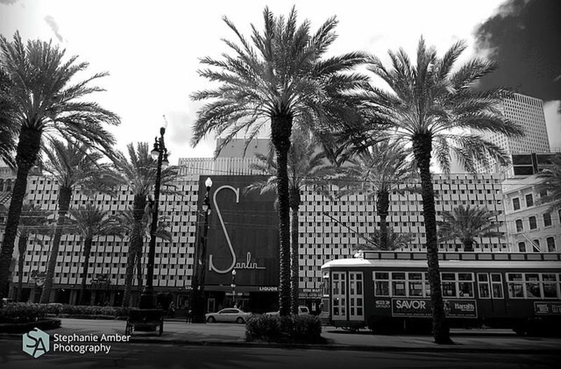 Palm trees and buildings against sky