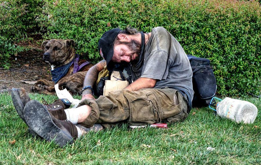 Homeless Homelessness  Dog Pets Companion Dog Canine Companion