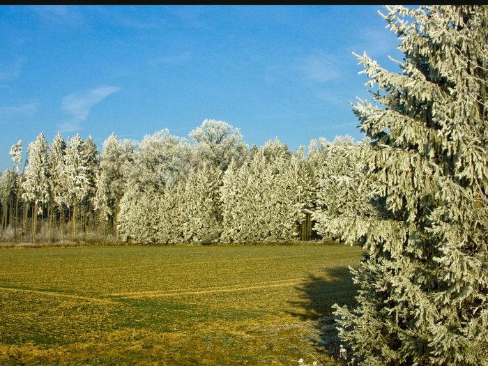 Reif in Schwaben bei Ulm Frost Landscape Nature No People Outdoors Reif Sky Tree Winter Trees Winterwald WinterWonderland❄️