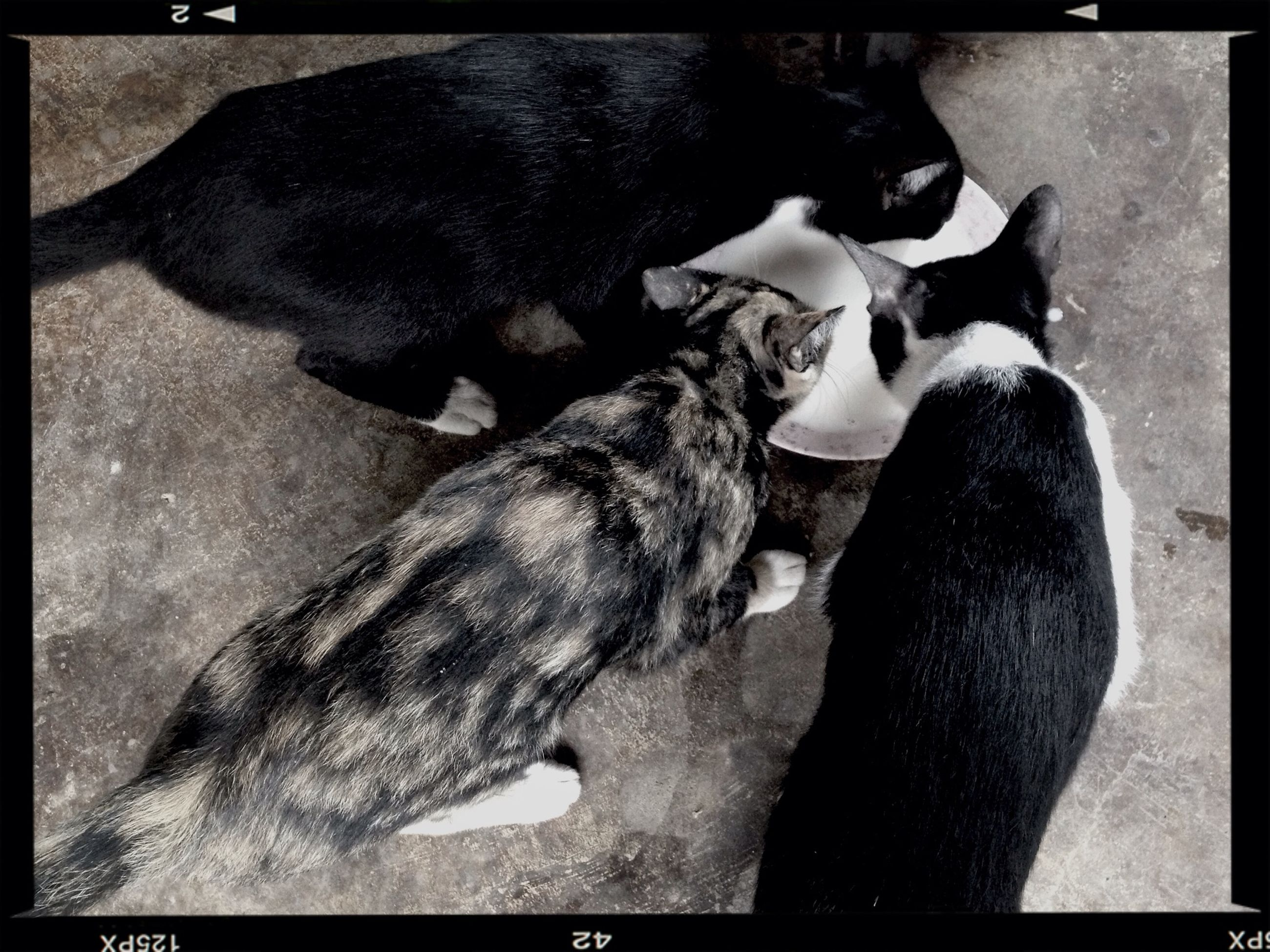 transfer print, animal themes, domestic animals, auto post production filter, pets, one animal, mammal, high angle view, relaxation, dog, cat, domestic cat, two animals, lying down, resting, sleeping, black color, zoology, full length, no people