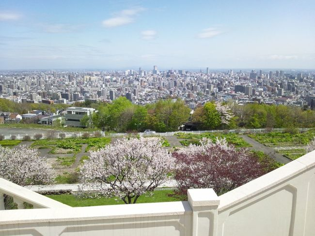 Beauty In Nature City Day High Angle View Nature No People Sky Tree