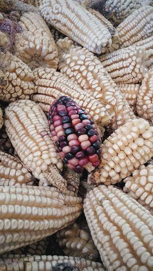 High angle view of maize