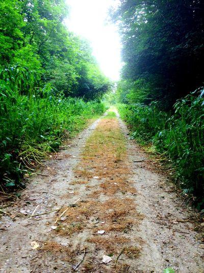 Petit Chemin Bike Alsace Amateur