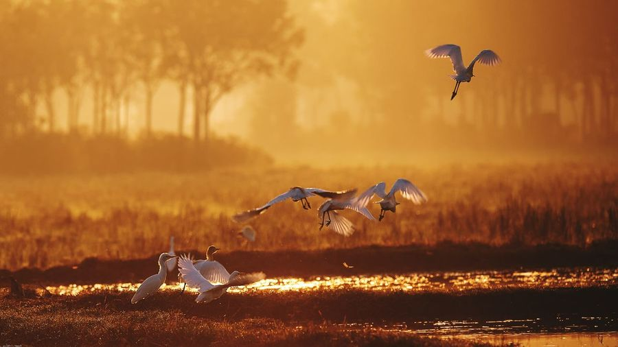 Flying Animal Wildlife No People Animals In The Wild Motion Mid-air Sunset One Animal Outdoors Nature Animal Themes Grace Day