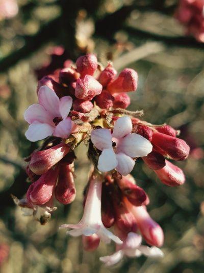 Blüten im