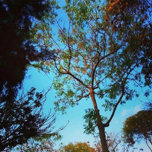 Atardeciendo junto a mi amorcito caminando por el parque Sky Cielo Sun Instaphoto instagood picture photo limaperu
