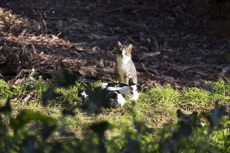 Sesta dos gatos ao sol || Cats sleeping on the sun || Animals Cats Hideandseek Animalshelter Apaff Figueiradafoz Portugal
