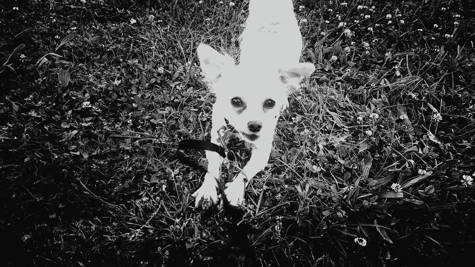 Closeupshot My Budddy Mr Bubbles Puppy Love Arf Arf!