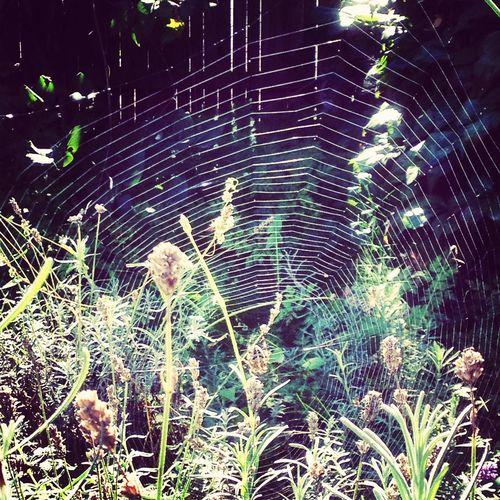 Spider Web Spinnennetz Spinne Nature Collection