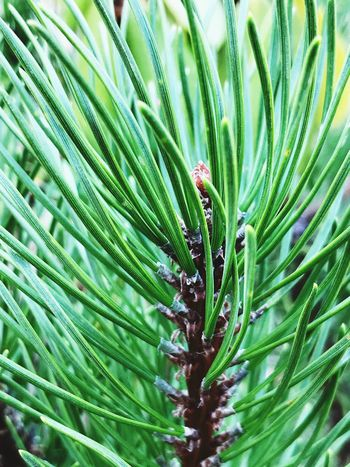 Growth Green Color Plant Leaf Plant Part Beauty In Nature Close-up Selective Focus Freshness Natural Pattern Tree Outdoors Palm Tree No People Full Frame Backgrounds Day Wet Palm Leaf Nature