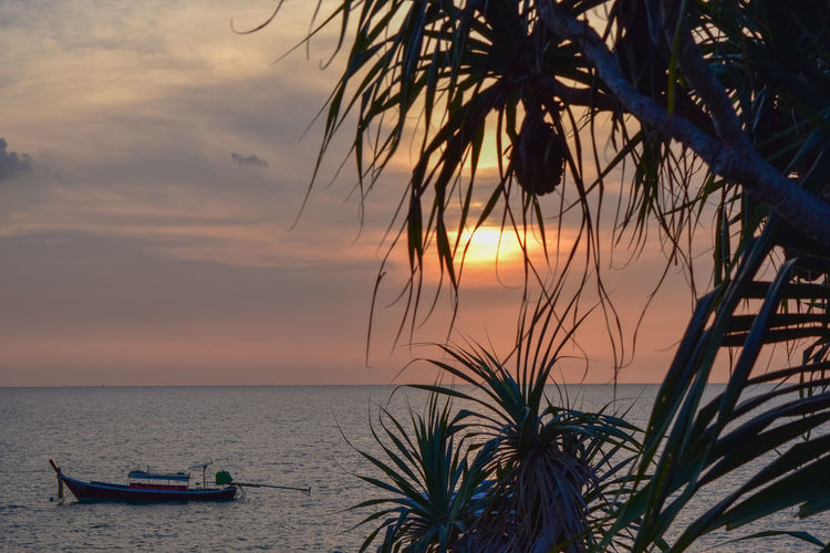 tranquil scene on Ko Lanta Ocean View Pineapple🍍 Silhouette Tranquility Tree Trees Boat Cloud - Sky Horizon Horizon Over Water Nautical Vessel Palm Tree Pineapple Plant Plant Scenics - Nature Sky Sunset Sunset #sun #clouds #skylovers #sky #nature #beautifulinnature #naturalbeauty #photography #landscape Water