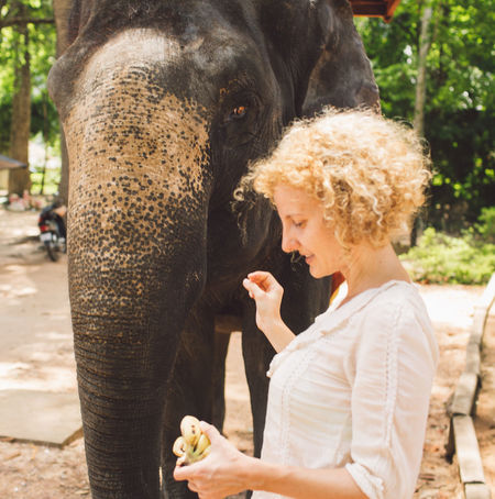 Siem Reap Cambodia Angkor Curly Hair Girl Elephant Feeding  Mammal One Animal One Person Domestic Animals Adult Day Vertebrate Women Lifestyles Focus On Foreground Leisure Activity Hair Animal Wildlife Real People Domestic Pets Hairstyle Outdoors Care