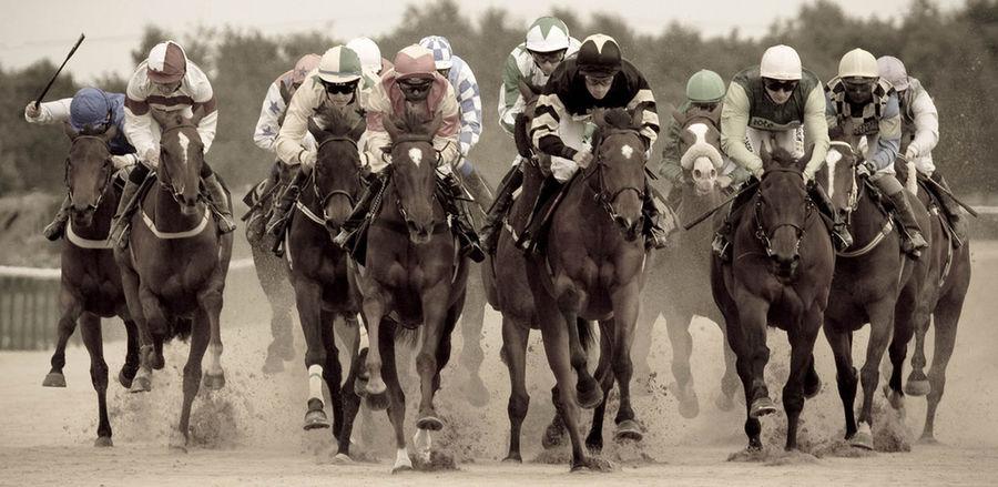 Animal Animal Themes Domestic Animals Horse Horse Race Jockey Jockey Club Livestock Mammal Southwell Racecourse