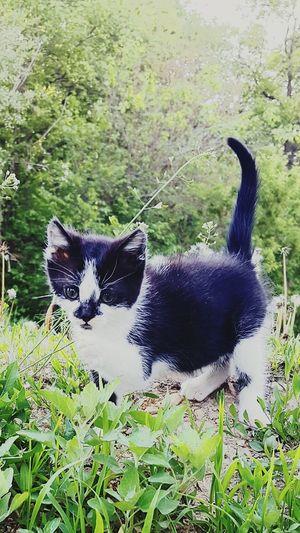 Kitten Nip Sharp Outdoor Photography Outside Farm