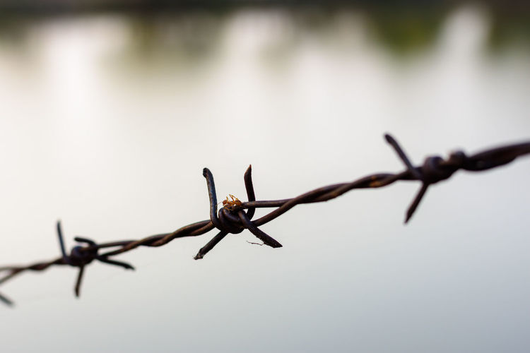 close up old barbed wire fence Barbed Wire Barrier Boundary Close-up Communication Day Exclusion Fence Focus On Foreground Metal Nature No People Outdoors Protection Safety Security Selective Focus Sharp Sign Warning Sign Wire