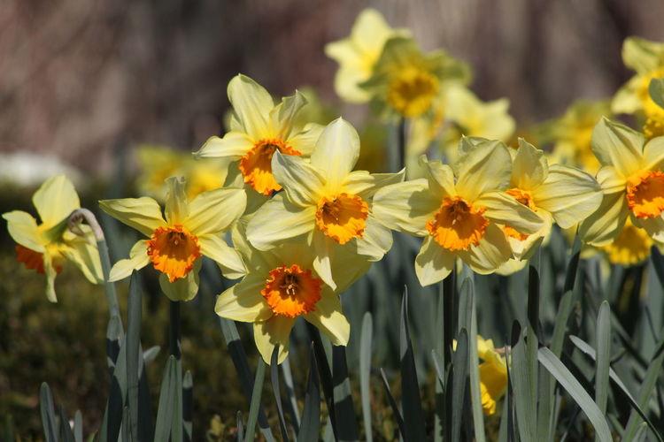 Flower Flower Head Fragility Freshness Growth Petal Plant Pollen Yellow