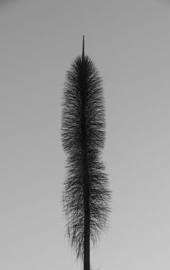 Sky Tree Clear