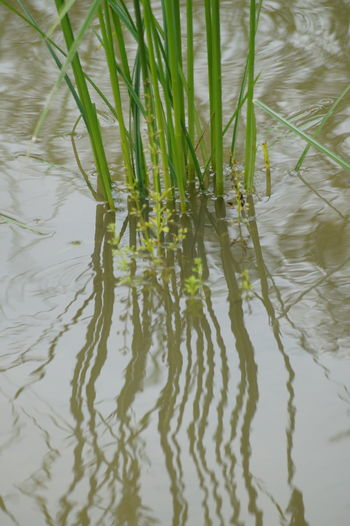Reflections Animal Themes Backgrounds Beauty In Nature Close-up Day Full Frame Grass Green Color Growth Lake Nature No People Outdoors Plant Reflection Swimming Tranquility Water