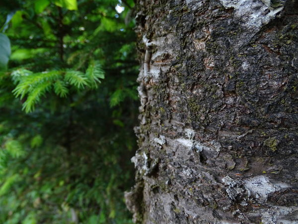 Focus On Foreground Forest Growth Lichen Moss Nature No People Plant Textured  Tree Tree Trunk Trunk
