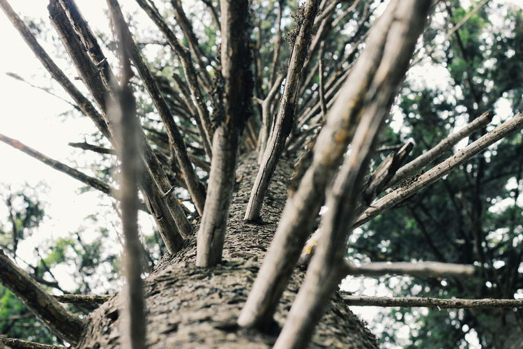 Tree Tree Trunk Nature Outdoors Day Branch Low Angle View No People Sky Beauty In Nature Textured  Texture EyeEm Best Shots Forest Carpathian Nature CarpathianMountains Taking Photos Dragobrat Travel Destinations EyeEm Gallery Dragobrat,Ukraine EyeEm Beauty In Nature Tree