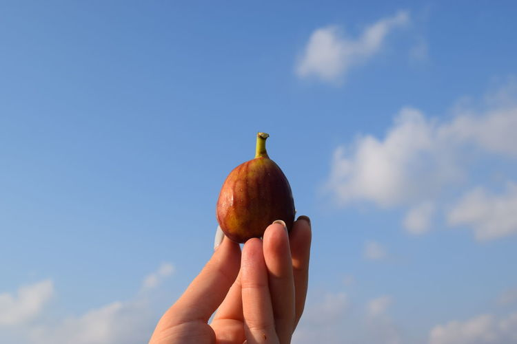Close-up of hand holding fig against blue sky