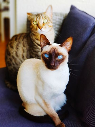 High angle view of cats sitting on sofa at home