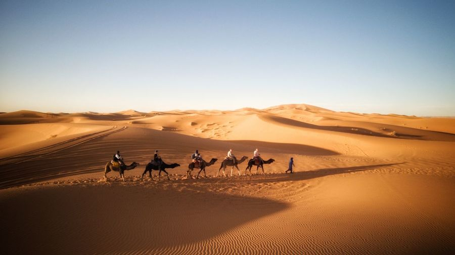 People riding camels at desert against clear sky