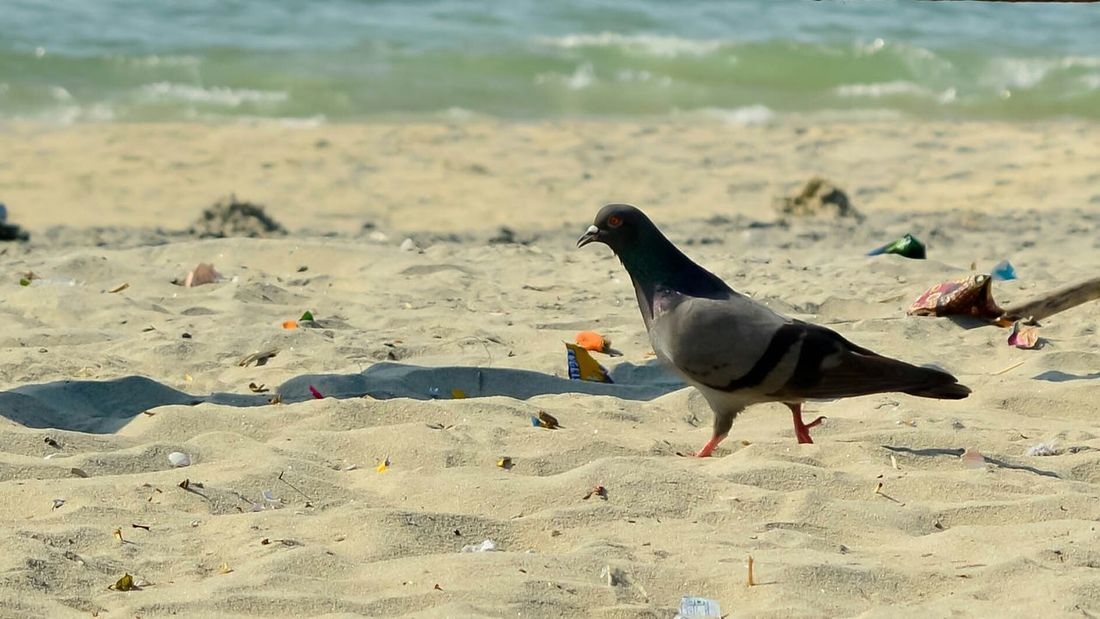 Doves Pigeons Best Of The Best EyeEm Best Edits India Popular Best Of The Day Colour Photography Photography EyeEm Gallery Freelance Life EyeEm Best Shots Popular Photos EyeEm Nature Lover Save The World On The Beach Life Is A Beach Beach Life Beach Photography Sea Side Beach