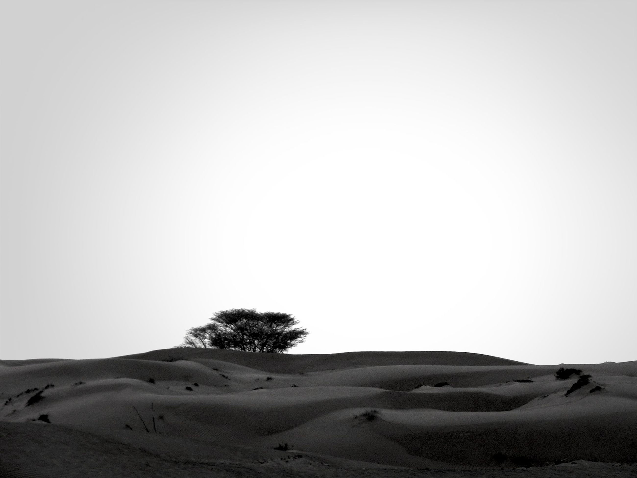 landscape, clear sky, tranquil scene, tranquility, desert, copy space, scenics, arid climate, sand, nature, beauty in nature, mountain, non-urban scene, remote, sand dune, horizon over land, barren, sky, tree, solitude