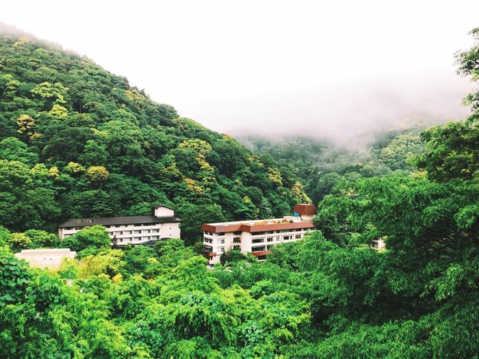 We have arrived at our Ryokan. In the middle of nature we'll spend our last days in Japan. Tradional Japan Plant Tree Green Color Nature Growth Beauty In Nature Sky No People Land Tranquility Day Lush Foliage Tranquil Scene Outdoors Scenics - Nature Fog Forest Foliage