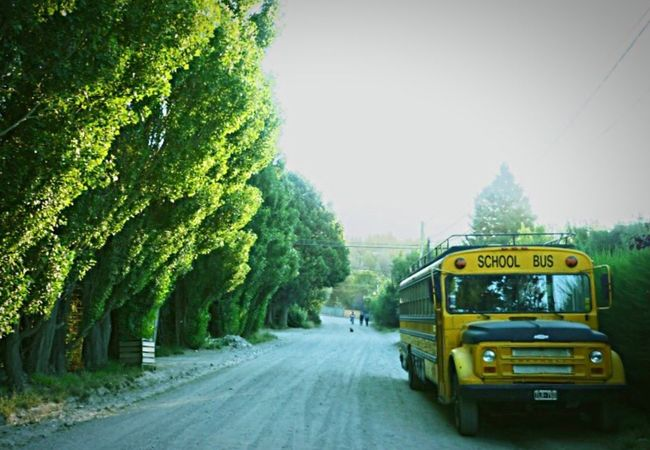 Transportation Tree Mode Of Transport Street Road Land Vehicle Day Yellow Outdoors Sky No People