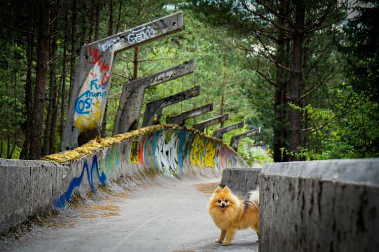 Portrait of dog standing on footpath in forest