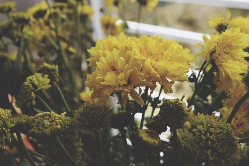 Una de las cos mas lindas Taking Photos Relaxing Flowers Buena Energía Armonia Yellow Flower Relajante Enjoying The View Happy