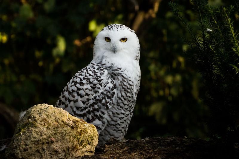 Owl Perching On Rock