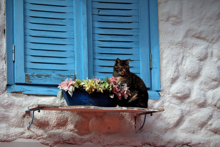 Cat and potted plants on window sill