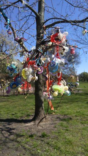 Baby NippleLove Branch Copenhagen Cultures Danmark Nature No People Outdoors Park Tree