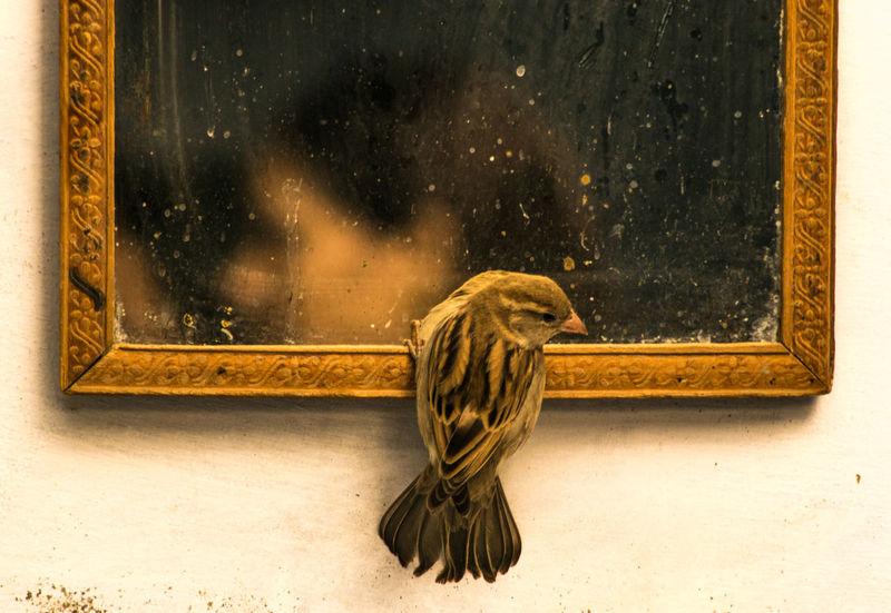 #bird #InHouse #mirror #RANDOM #Sparrow Close-up Day Indoors