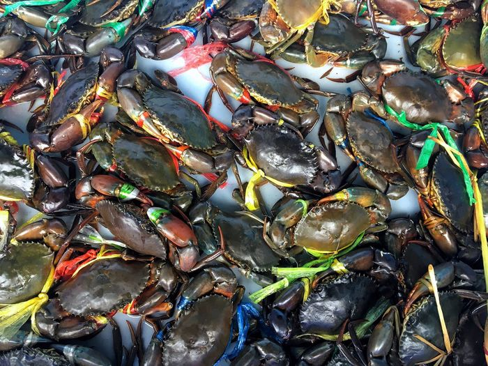 In Southeast Asia Thailand have bigger market crabs.Thai people is fishing career on country Nature Backgrounds EyeEm Gallery EyeEm Full Frame Backgrounds High Angle View Day No People Abundance Multi Colored Close-up Animal Nature Animal Themes Fishing Industry