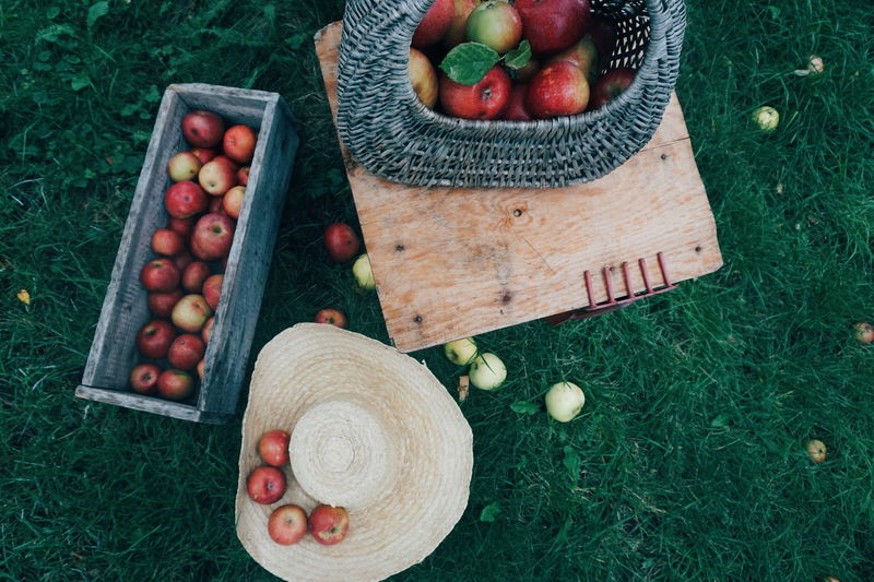 High angle view of apples in containers on field