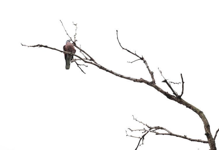 Bird Photography Bird On The Tree Bird And Tree Bird In Nature Animal One Animal Animal Themes