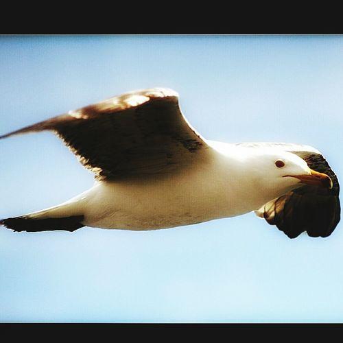 EyeEm Best Shots Hello World Bysinaneksi Objektifimden Objektifimdenyansiyanlar Objektifiminden Picsart Animal Flying instagram adresim @snneksii