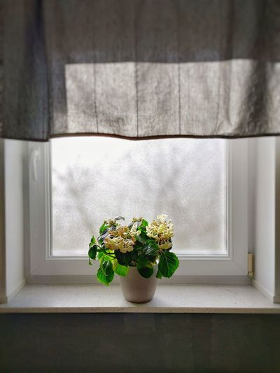 Potted plant in vase against window at home