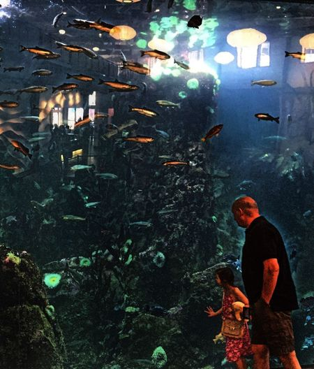 Fish Watching Aquarium What Are YOU Looking At? Water Observing Life Light Glare Reflection