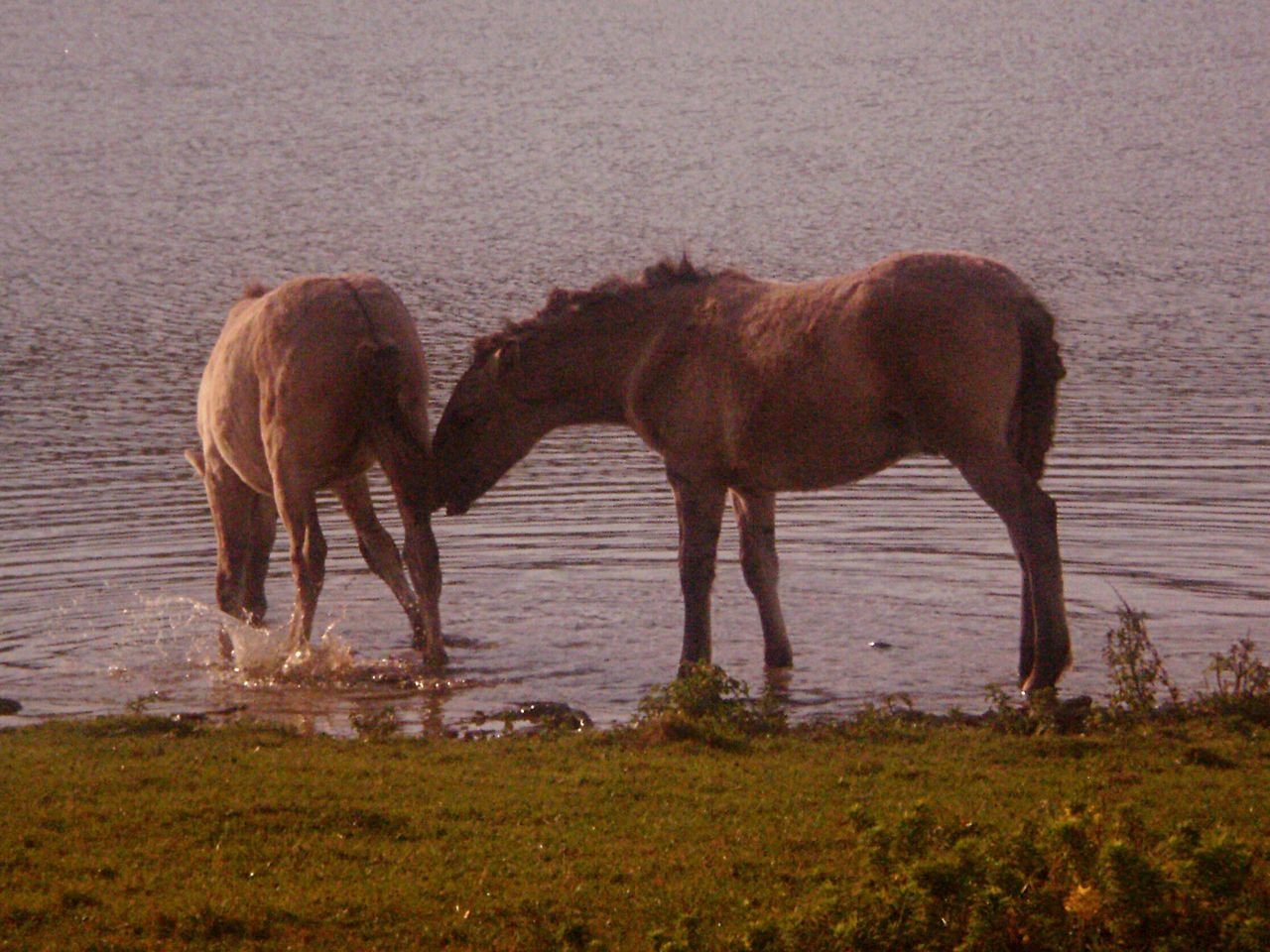 horse, two animals, animal themes, mammal, domestic animals, togetherness, nature, outdoors, livestock, no people, day, standing