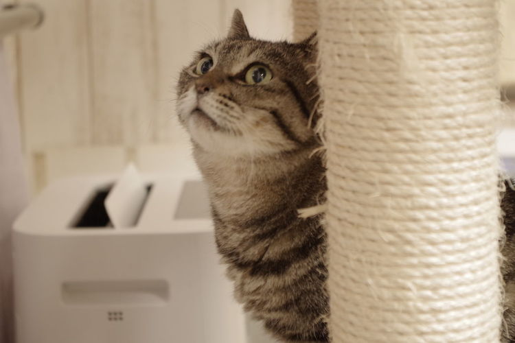 Cat Cute KAWAII