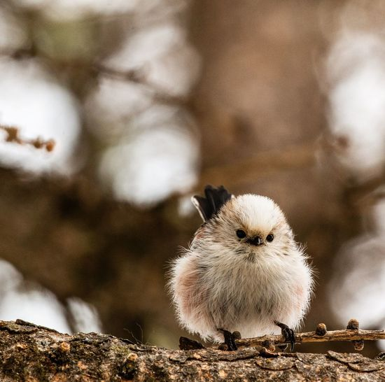 Animal Themes Animal Bird No People Vertebrate Animal Wildlife One Animal Day Young Animal Young Bird Animals In The Wild Nature Close-up Baby Chicken Outdoors EyeEmNewHere