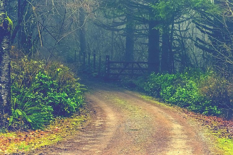 """""""Unremarkable Lives are marked by the fear of not looking capable when trying something new"""" ~ Epictetus This Way Forward The Road Less Travelled Larch Mountain, WA State Beauty On The Mountain Foggy Mornings Misty Forests WA State PNW Wonderland WA State Photography Tranquility Textures Pnwnaturescapes Pnwisbest EyeEm 2017 Collection CountryGirlsDoEverythingBetter CountryBackRoads ScenicLandscape Photography Pnwcollective"""