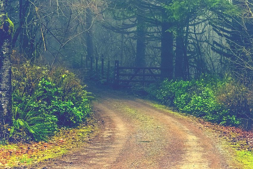 """Unremarkable Lives are marked by the fear of not looking capable when trying something new"" ~ Epictetus This Way Forward The Road Less Travelled Larch Mountain, WA State Beauty On The Mountain Foggy Mornings Misty Forests WA State PNW Wonderland WA State Photography Tranquility Textures Pnwnaturescapes Pnwisbest EyeEm 2017 Collection CountryGirlsDoEverythingBetter CountryBackRoads ScenicLandscape Photography Pnwcollective"